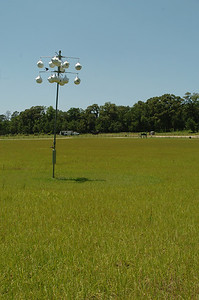 The Purple Martin condos were buzzing with activity today.