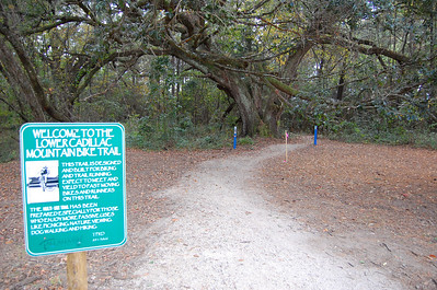 The oaks and blue Carsonite markers mark the actual trailhead. Trail marker #36 is straight ahead, #79 (where we'll be going) is to the left.