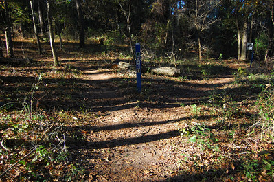 Loblolly continues ahead to the left. The right fork is a short connector to Cadillac Trail at #32C.
