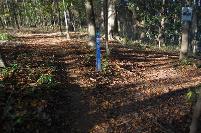 Loblolly Trail's east terminus. Cadillac Trail's trail marker 33C is immediately downhill to the right. Taking the left fork here to begin Loblolly, you'll quickly be at #1L.