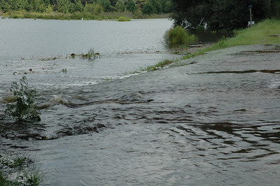 27Aug08: As water flowed east to west from Lower Lake Lafayette (r) to Lake Piney Z (l), fish were attempting to salmon their way upstream into the gator's jaws. Ain't nature great?