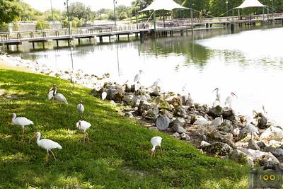 Cranes-Roost-Park_0060
