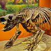 Harlan's Ground Sloth - Skeleton ( composite cast )<br /> <br /> 10,000 - 40,000 years old<br /> Pleistocene Epoch, Rancho La Brea, LA County, CA