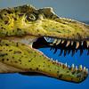 Albertosaur, tyrannosaur family<br /> Skeleton composit cast/sculpted body<br /> 75 millioin years old, Cretaceous Period<br /> Original fossil: Judith River Group, Alberta, Canada
