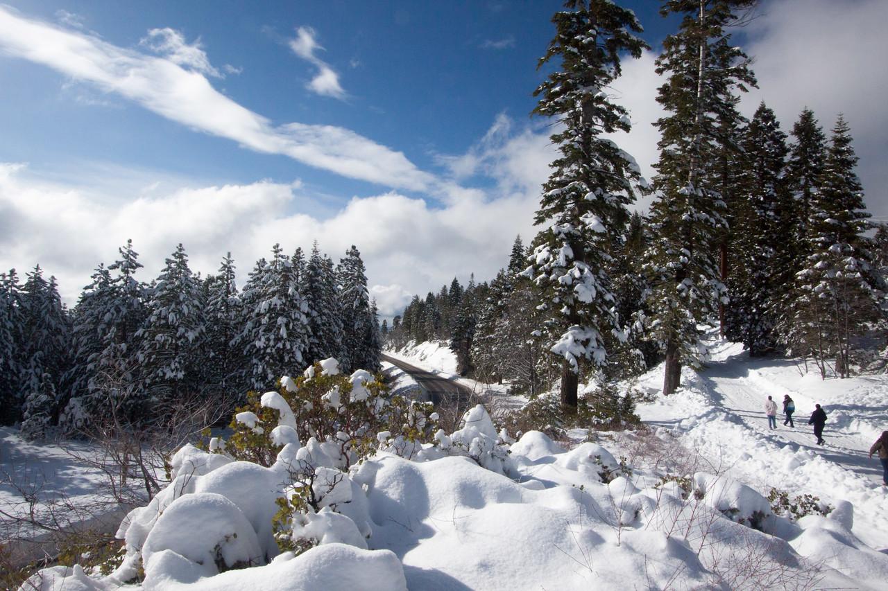 Snow-4551
