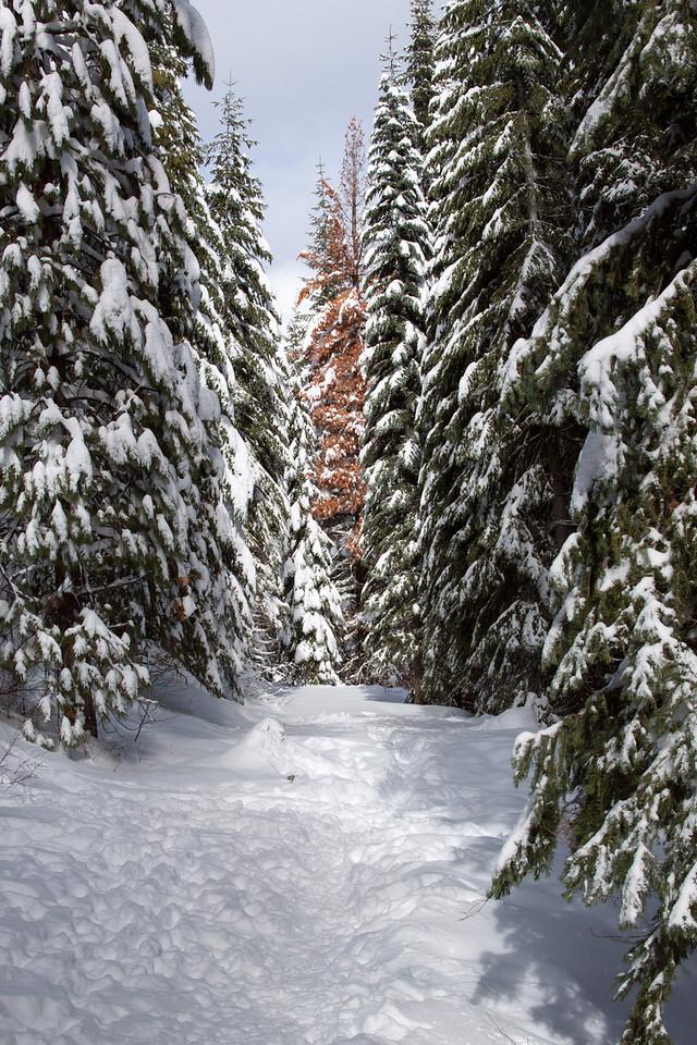 Snow-4596
