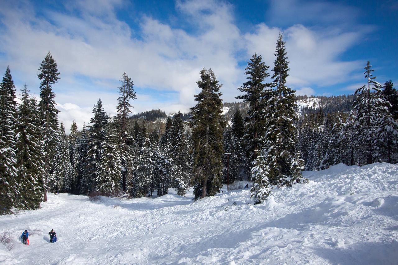 Snow-4556