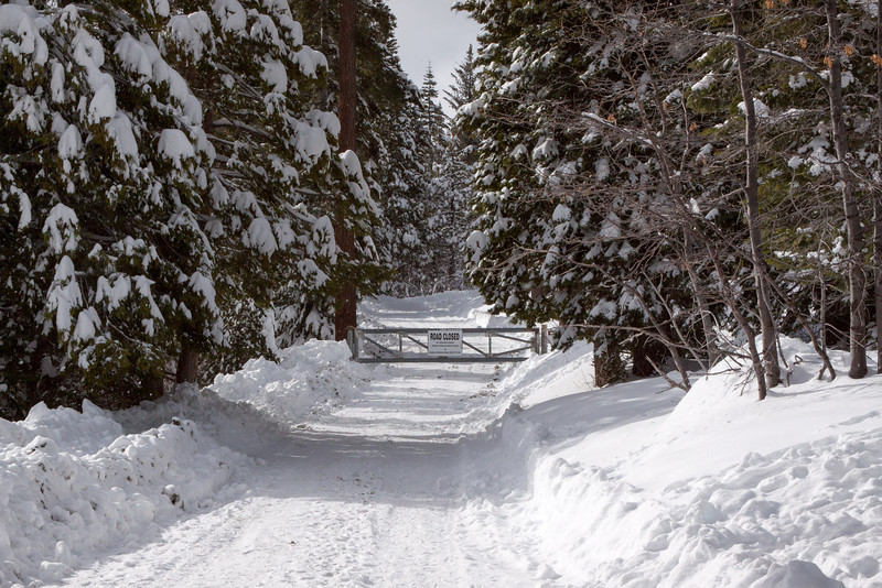 Snow-4618
