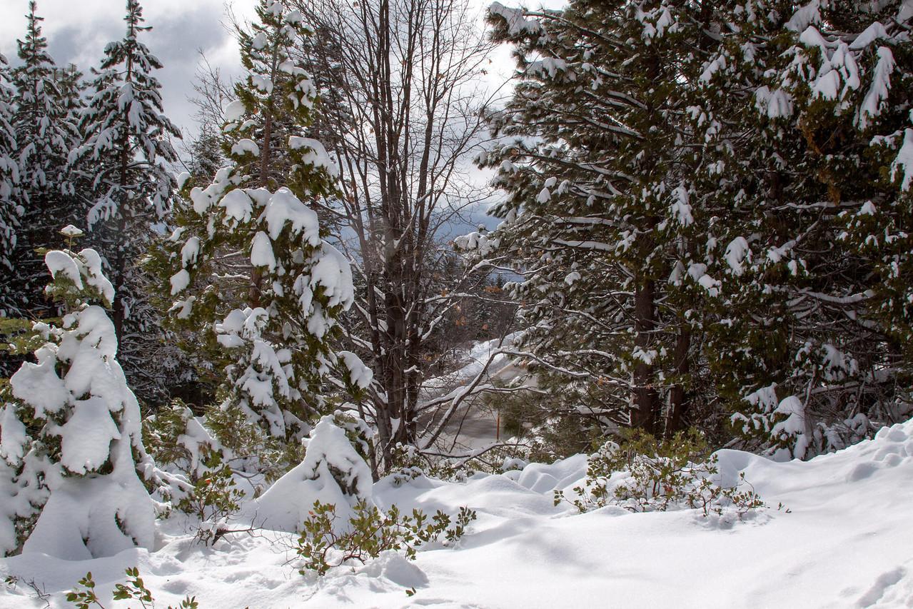 Snow-4620