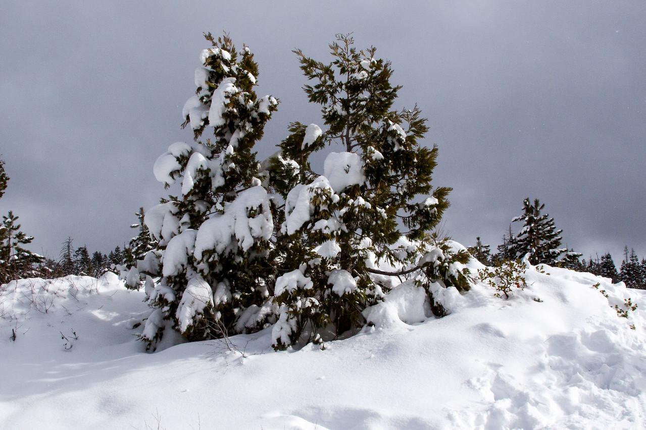 Snow-4615