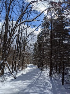 Snowy Trail at BVNA