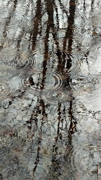 Raindrops at Vernal Pool