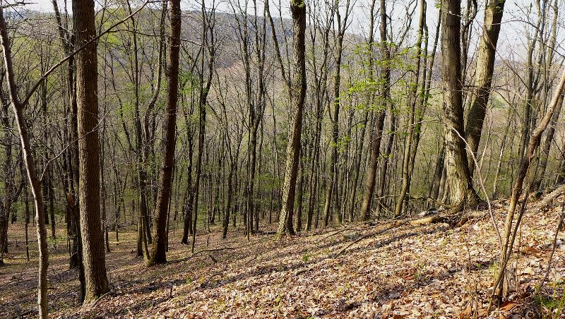 Hillside at the Parker Tract