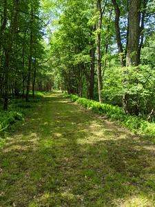 Grassy Paths