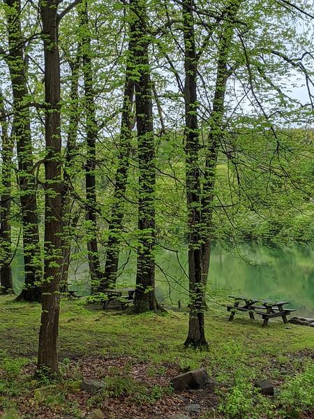 Blue Spruce Picnicking