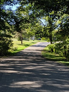 Blue Spruce Park Roadway