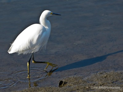 Bolsa Chica Wetlands, Huntington Beach, CA