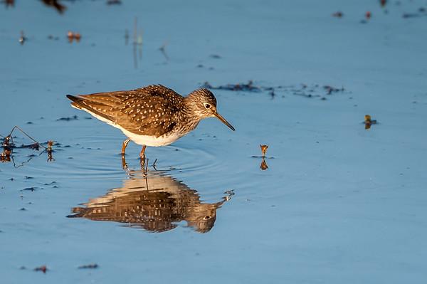 Water Bird 05