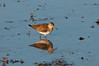 Water Bird 02