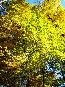 Fall Splendor at Buttermilk Falls
