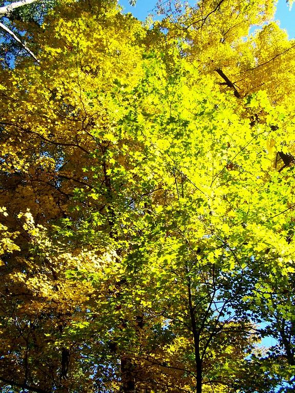 Fall Spledor at Buttermilk Falls