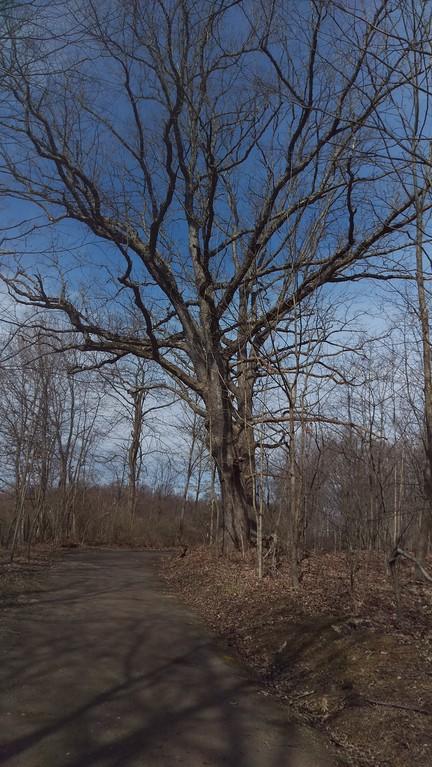Witness Trees