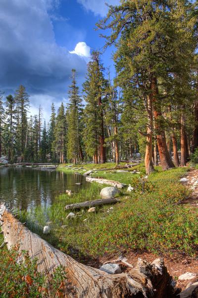 Jennie Lake Wlild-4316_7_8_tonemapped