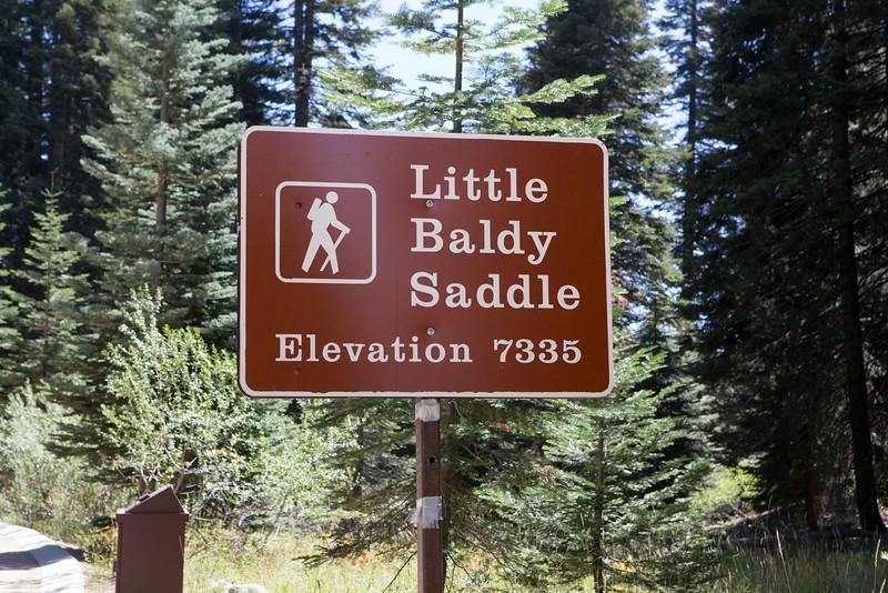 Little_baldy-6689