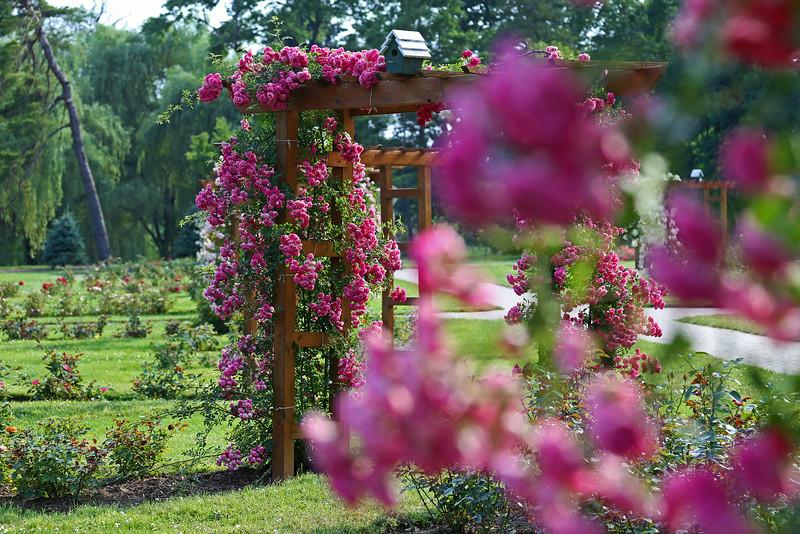 The Rose Garden - Allentown, PA - 2014