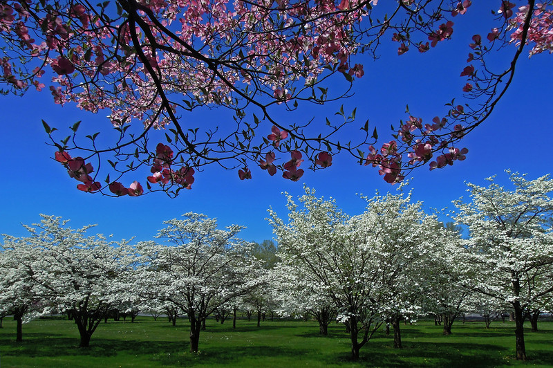 Cedar Creek Park - Allentown, PA - 2013