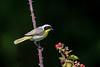 Meadowlark Dog Park-6967