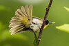 Meadowlark Dog Park-7142