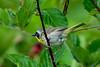 Meadowlark Dog Park-6992