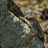 Lizard's Claws Are Very Visible and Very Sharp