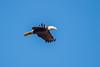 Eagle-2101