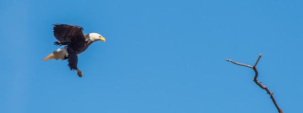 Eagle-2043
