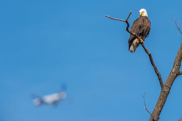 Eagle-2072