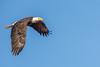 Eagle-2089