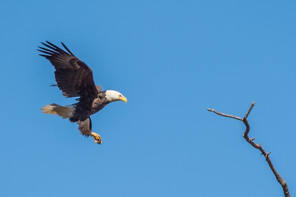 Eagle-2045