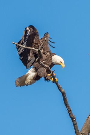 Eagle-2051