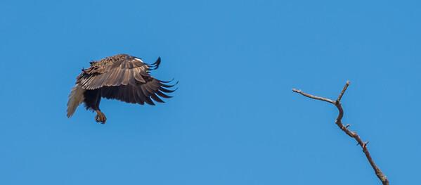 Eagle-2044