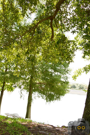 Cranes-Roost-Park_0035