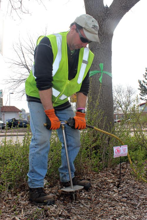 Ash Tree Soil Injection