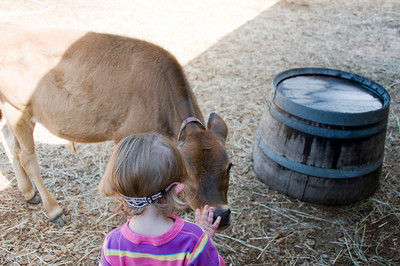 The Petting Zoo at Forest Park