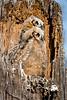Owls-0826