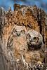 Owls-0893