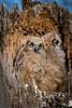 Owls-0906