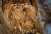 Owls-0917