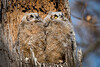 Owls-0925
