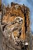 Owls-0875